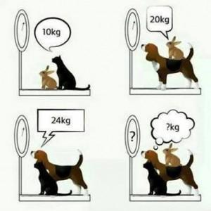 Problème du chien, chat et du lapin